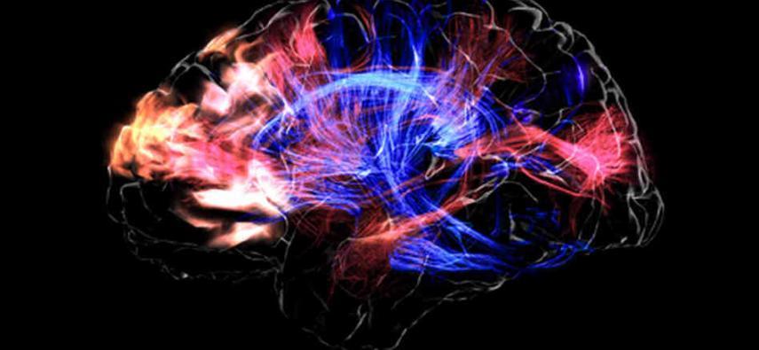 Pamiętne sny - neuroanatomia pamięci snów