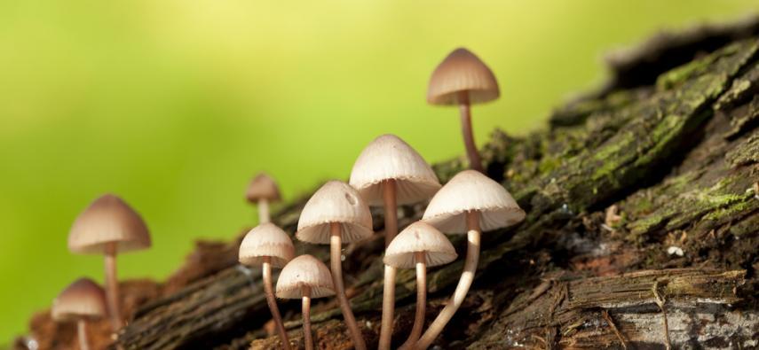 Magiczne grzybki łączą neurony