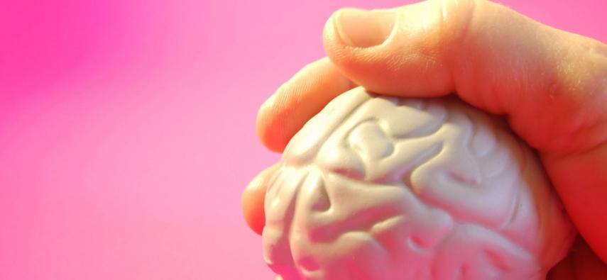 Organoidy, czyli o hodowli mózgu