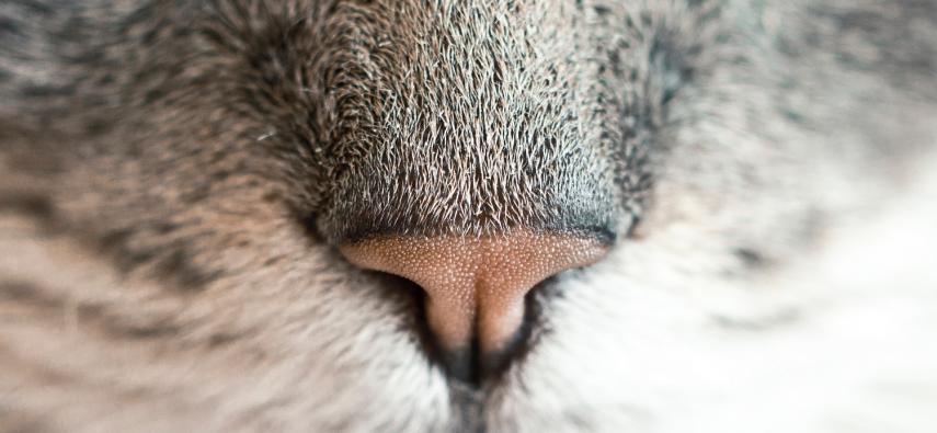 Zamknij usta! Wpływ oddychania przez nos na zdolności poznawcze