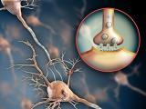 Komórkowe podłoże działania układu nerwowego