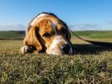 Modelowanie depresji u zwierząt - skuteczność i użyteczność programów badawczych w kontekście leczenia depresji